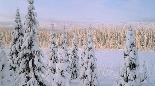 Laponia finlandesa vip en invierno catai tours - Cabana invierno ...