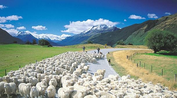Black Sheep New Zealand Tours