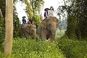 A lomos de elefante, Chiang Mai