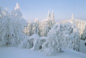 Bosque cubierto de nieve, Laponia