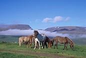 Caballos en las montañas, Hestar
