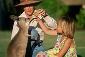Damos de comer a los canguros