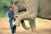 Elefante con su adiestrador