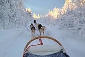 Excursión con trineo de perros en Salla