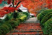 Jardín en Otoño, Kyoto