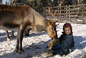 Niño con reno
