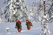 De paseo por el bosque nevado, Laponia