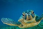 Tortuga en el atolón