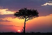 Una acacia contempla la puesta de sol en Masai Mara.