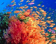 Buceo en Fiji