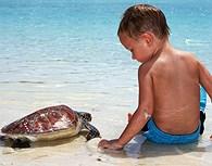 Cría de Tortuga, Bora Bora