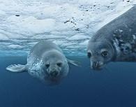 Fauna antártica