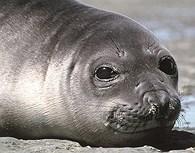 Fauna patagónica