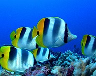 Peces en el fondo marino
