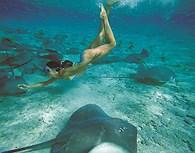 Snorkelling con las Mantas Raya, Bora Bora