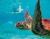 Tortuga marina en Polinesia