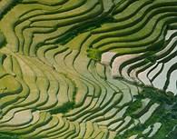 Vista aérea de campos de arroz